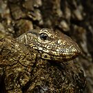 Varanus in tree by Inez Wijker