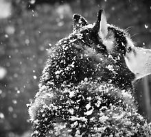 Snow Dog by LaureenDelannoy