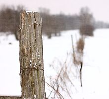Fence Post Textured by AbigailJoy
