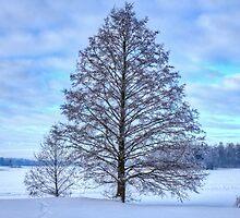 Photogenic Tree by pixog