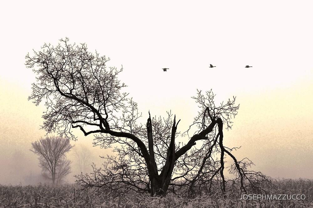 birdland.. by JOSEPHMAZZUCCO