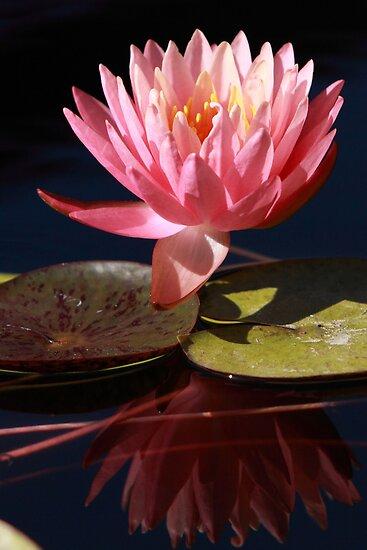 Halfway Open Fairy Skirt Water Lily by Robert Armendariz