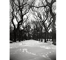 Trees in the Park Photographic Print