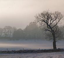 Lonesome Tree 2 by Jennifer J Watson