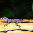 Lizard by Ticker