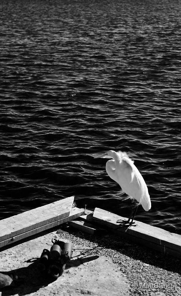Snowy Egret by MattBlanco