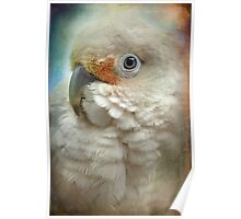 Finer Feathered Friends: Goffin Cockatoo Poster