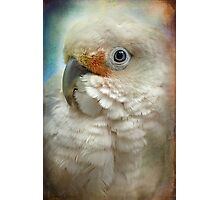 Finer Feathered Friends: Goffin Cockatoo Photographic Print