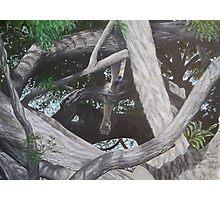 African Limbs Photographic Print