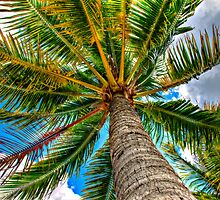 The Palm by Euge  Sabo