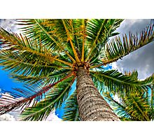 The Palm Photographic Print