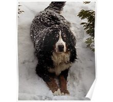 Snow Rescue Dog  Poster