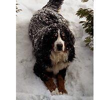 Snow Rescue Dog  Photographic Print