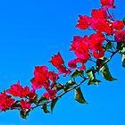Purple leaves against a blue sky by Benjamin Gelman