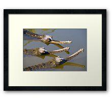 Conspiracy crocodiles Framed Print