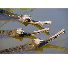 Conspiracy crocodiles Photographic Print