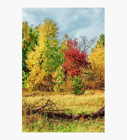 Walking in the autumn forest Photographic Print