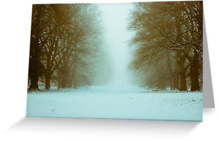 Nowton Park,Winter,Bury St Edmunds,Suffolk,UK by Suffolk Photography