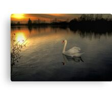 White Swan at Sunset  Canvas Print