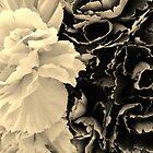 Valentine's Carnations 2 by ekenney87
