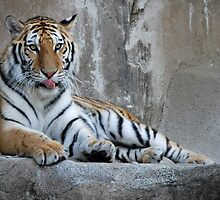 Hungry Tiger by Kathleen Brant