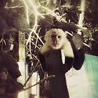 White-faced Monkey 1.2 by jmkay9876