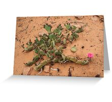Cactus,Kodachrome State Park,Utah USA Greeting Card