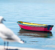 red dinghy and seagull by Anne Scantlebury