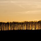 Bare Tree Hill 2 by WhyteAugust