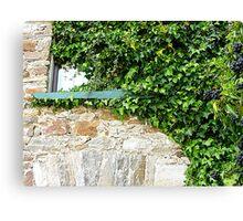 Ivy Clad Window Canvas Print