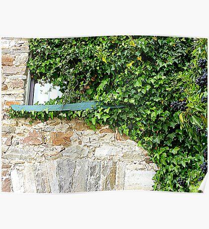 Ivy Clad Window Poster
