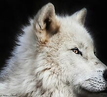(Arctic wolf...) .... I dream of Hawaii.....(^_^)  by John44