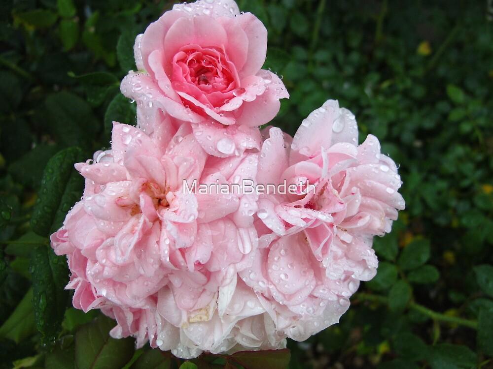 Pink splendour by MarianBendeth