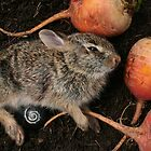 Bunnykins Beet by photocase