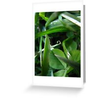 Holy Dew Greeting Card