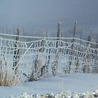 Frosty Fence by Arla M. Ruggles