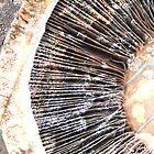 Mushroom and lichen by Morag Anderson
