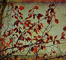 Red leaves by Nadeesha Jayamanne
