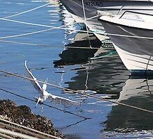 Damn mooring lines!! by Paul Pasco