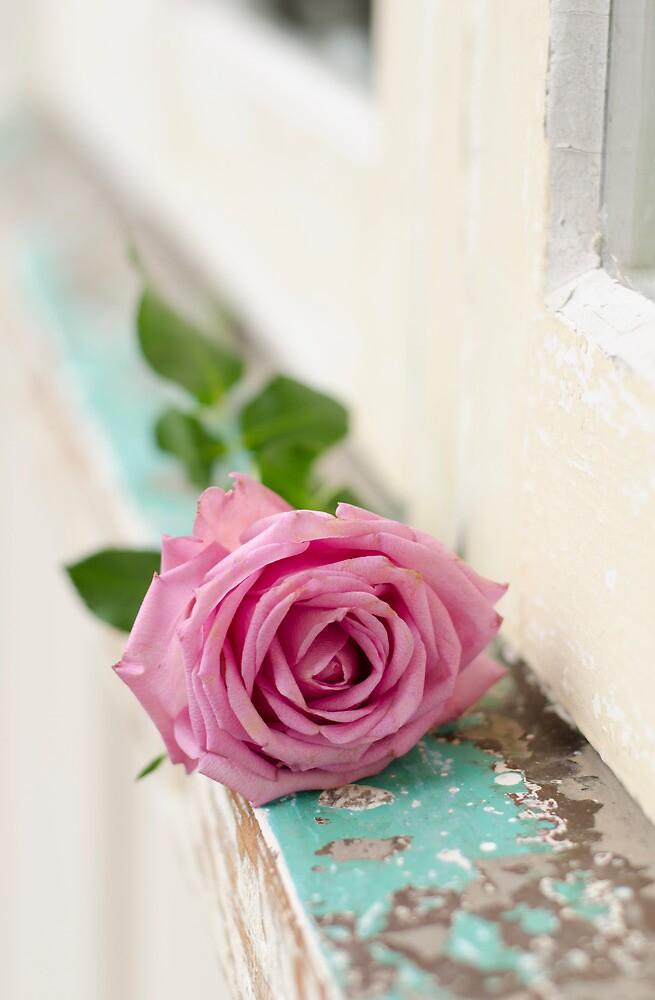 One Pink Rose by Carol Knudsen