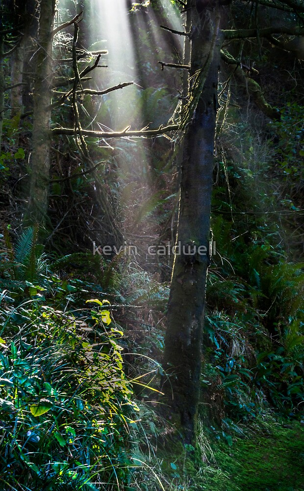 enlighten by kevin  caldwell
