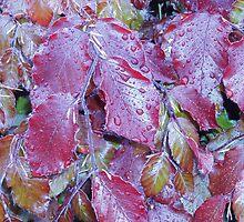 Red Leaves by KittenPokerUK