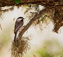 Chickadee Oil by Paul Wolf