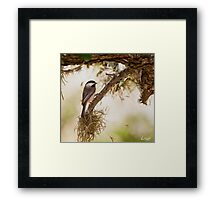 Chickadee Oil Framed Print