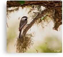 Chickadee Oil Canvas Print