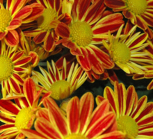 Mums - Red & Yellow Sticker