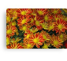 Mums - Red & Yellow Canvas Print