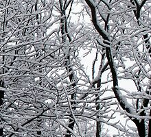 Snow laden winter trees by pateabag