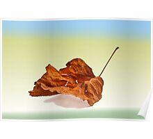 Autun leaf  Poster