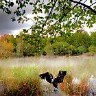 In the calm water. by Benjamin Gelman